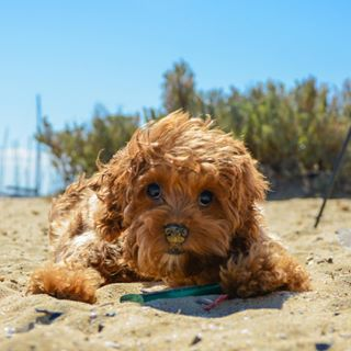 Brighton Dog Beach, Brighton | 19 Places To Really Chill The Fuck Out In Melbourne