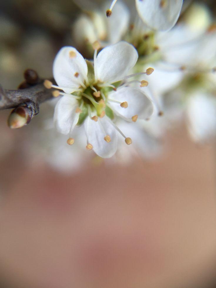 Que demander de plus...? ❤️ #flowers #flower #nature #fleur #auvergne #france #photo #photooftheday #picoftheday #photographie #photography #macro #iphone #summer #spring