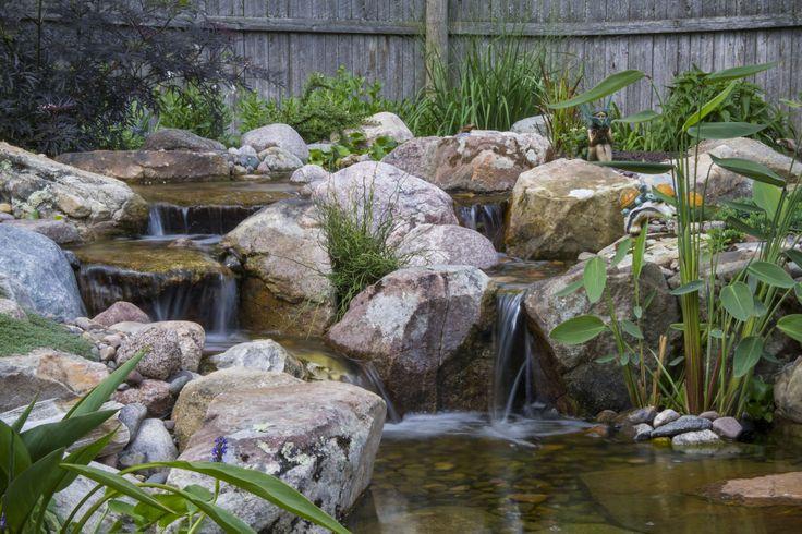Best 25 rock waterfall ideas on pinterest for Pond friendly plants