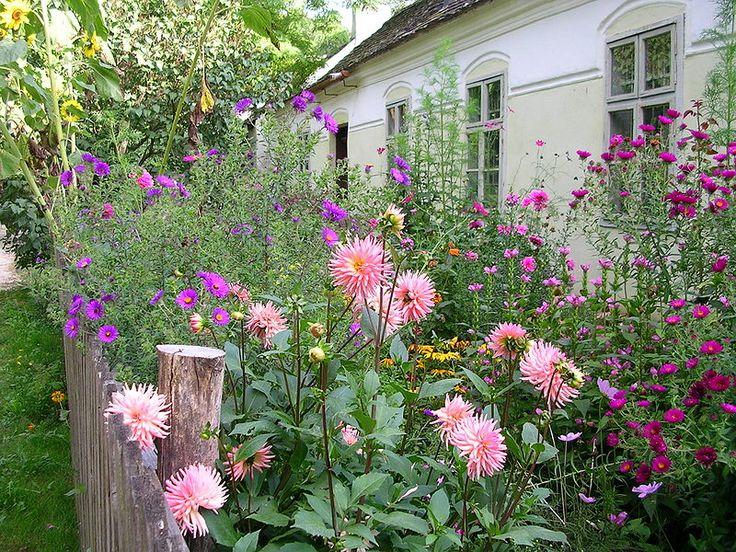 In einen Bauerngarten gehören unbedingt Dahlien. Eine große Auswahl gibt es im Onlineshop www.fluwel.de