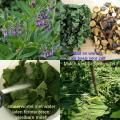 vaste plant:   Smeerwortel 'Bocking 14' woekert niet en is super als compost