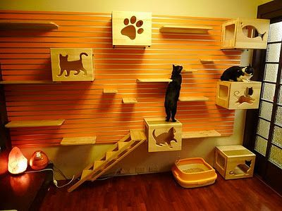 """cool DIY wall project for people who really love their cats :) (Could be a cool """"activity room"""" at the shelter too!)"""