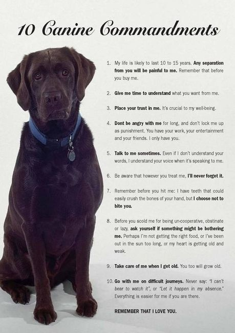 10 canine commandments. Think before you get a dog, can you be committed to this relationship. If so, enjoy dogs are awesome. @Jennifer Nelson via Chelsea McMillion