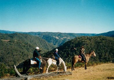 Horses on he Cox's River  Lookout