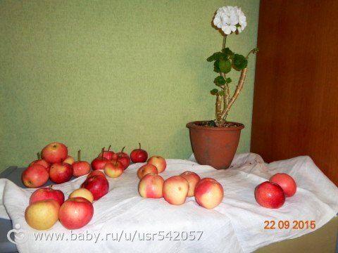 """Поль Сезанн """"Натюрморт с кустом герани и фруктами"""""""