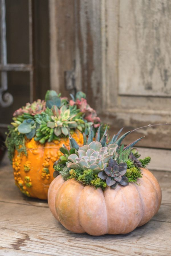 Planting a gorgeous pumpkin with your favorite succulents is one of the best ideas yet!