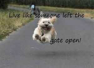 I love this dog and his apparent happiness in running free! :) makes me smile every time I see this picture!