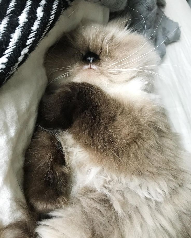 Pin by Angie wilson on Kitty cats in 2020 Pretty cats