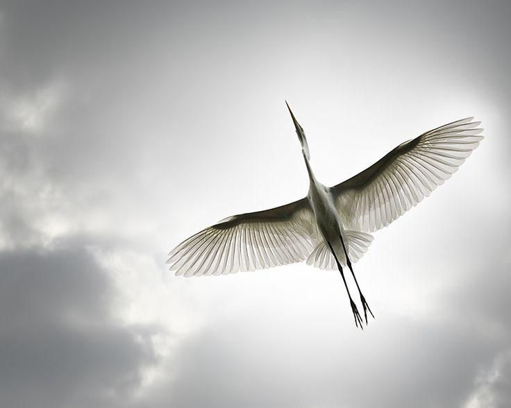 Mejores 167 imágenes de bird en Pinterest | Plumas, Animales y Amigos