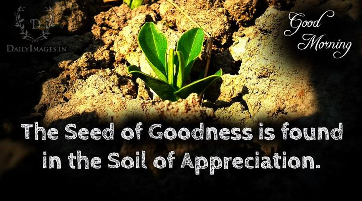 The seed of goodness is found in the soil of appreciation: Good Morning #goodmorning #gm #quotes