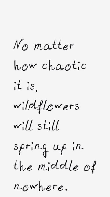 #wildflower #wanderer