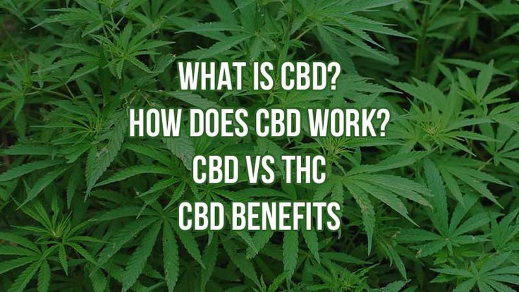 Cannabidiol CBD Review: What Is CBD? How Does CBD Work?