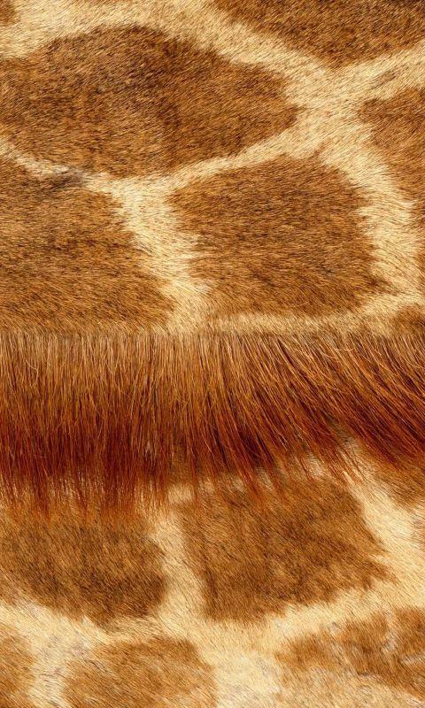Download Wallpaper 480x800 Wool, Smooth, Giraffe, Fur HTC, Samsung Galaxy S2/2, Ace 480x800 HD Background