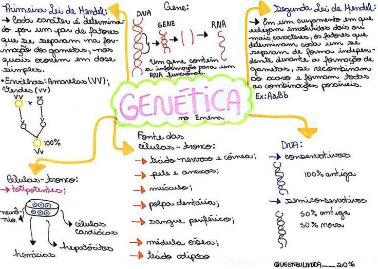 BIO - Genética 2