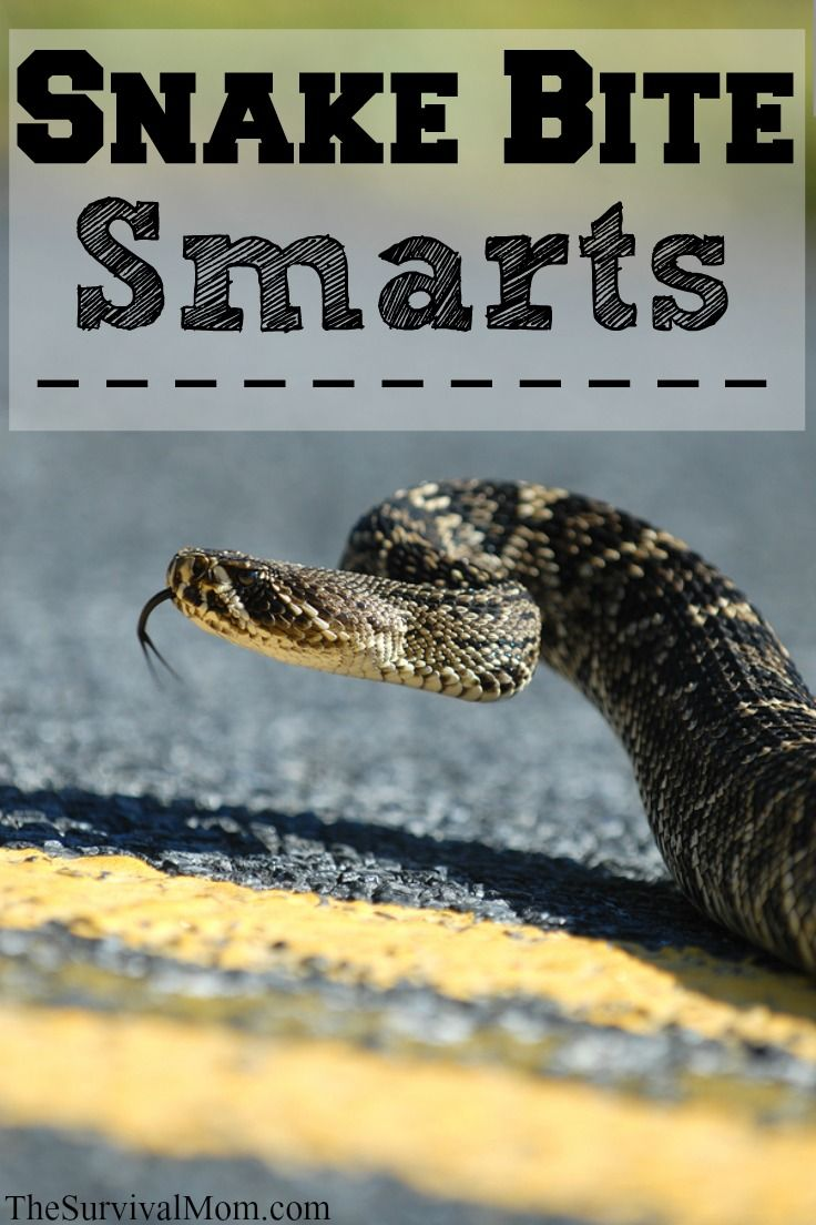 17 Best Ideas About Poisonous Snakes On Pinterest