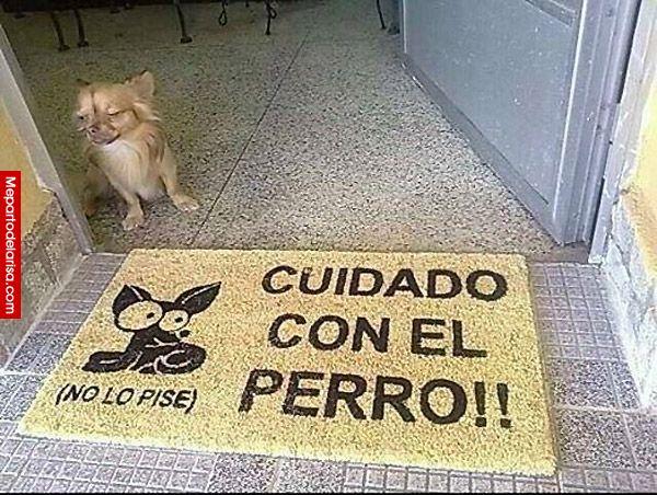 Cuidado con el perro… #perros #mascotas