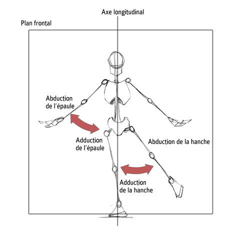 Abduction / Adduction de l'épaule et de la hanche dans le plan sagittal
