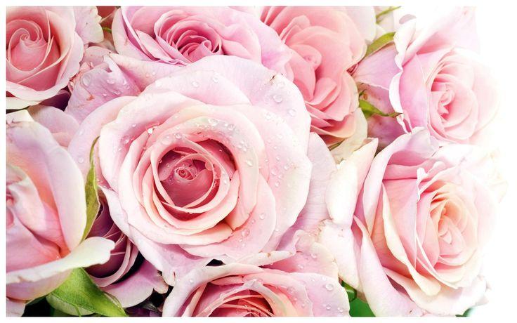 Le rose di colore rosa sono fiori duraturi, hanno la capacità di resistere agli attacchi esterni, nascono infatti su forti arbusti e già dalla prima fioritura sono temprati agli assalti della natura. Regalare una rosa di colore rosa in un certo senso vuol dire affidare a qualcun altro una cosa rara, di valore, preziosa perché radicata a sentimenti di sincerità e per questo vigorosa. #flower #bride #sposa #matrimonio #fiori #rose