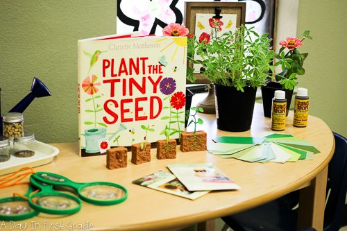 The beginning of a plant inquiry | A day in first grade | Bloglovin'