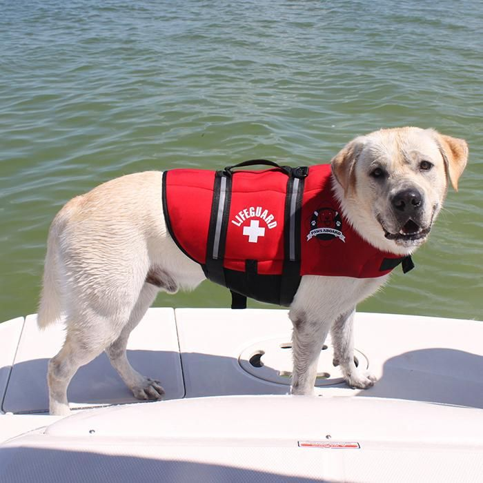 Dog in our PawsAboard Neoprene DOGGY LIFE JACKET. http://www.shop4pets.com.au/PET-AIDS/Life-Jackets/Neoprene/pl.php