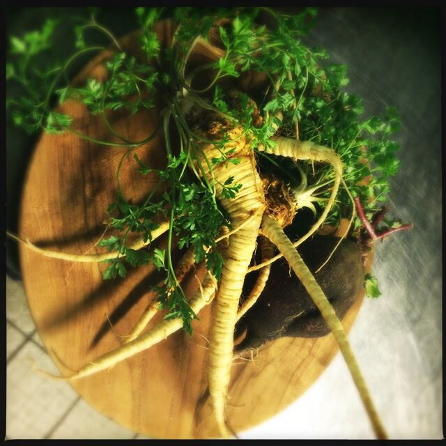 Parsley root from my Friend Steve
