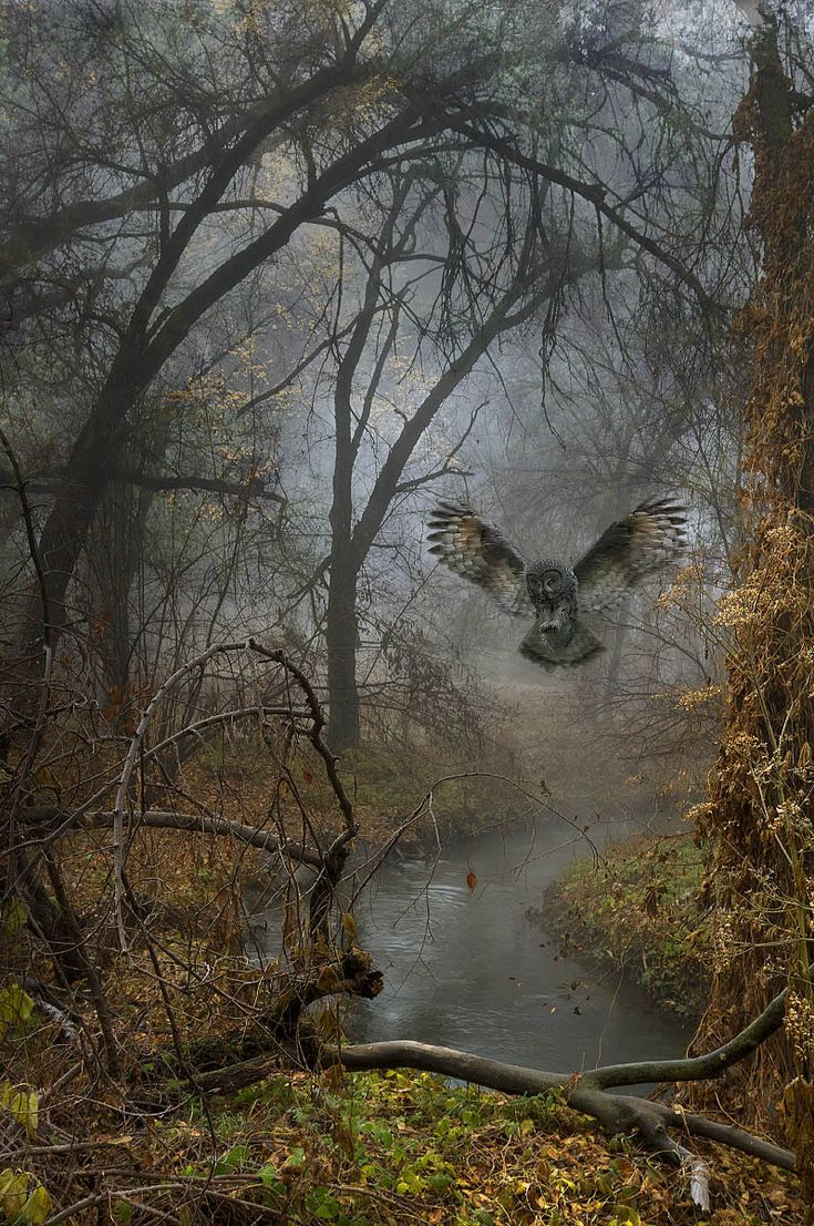 Flying owl in Eurasian forest - Beautiful nature images, pictures of birds, landscape photographs.