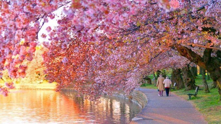 Bahar Aylarının Müjdecisi Çiçek Açan Ağaçlar Gönlünüzün Yaylarını Gevşetecek!