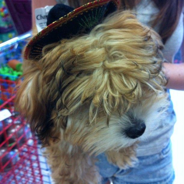 """Walter goes sombrero shopping."": Sombreros Shops"