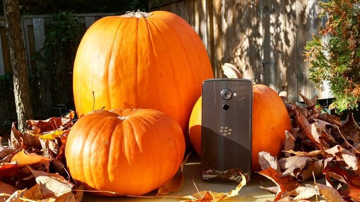 #inst10 #ReGram @blackberry: Pick up a real treat this Halloween with a new DTEK60 in your bag! The DTEK60 has fantastic specs and an even better price of $499 USD to back it up. See what people are saying about our newest smartphone! Link is in our bio. #TeamBlackBerry #DTEK60 #BlackBerryClubs #BlackBerryPhotos #BBer #BlackBerry #BlackBerryGirls #BlackBerryDTEK60 #BlackBerryDTEK #Android #Halloween #AndroidOS