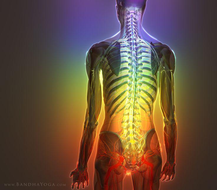 spinal manipulation and retrolisthesis Retrolisthesis is reverse spondylolisthesis in which one vertebra slips backward on another vertebra, narrowing the spinal capitol spine & rehabilitation.
