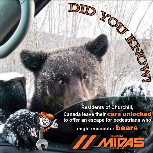 Did you know? Residents of Churchill, Canada leave their cars unlocked to offer an escape for pedestrians who might encounter bears!?!