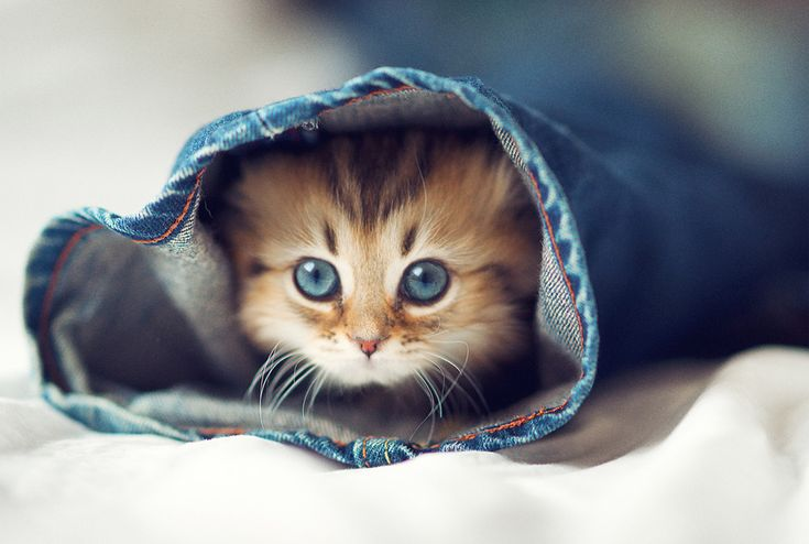 kitty in a sleeve<3