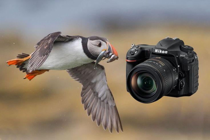 nikon d500 review wildlife photography