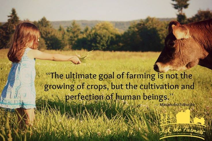 The ultimate goal of farming is not the growing of crops but the cultivation and perfection of human beings. | Minerva Dairy