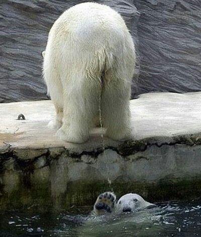 Stop it, stop it...you making me pee :|