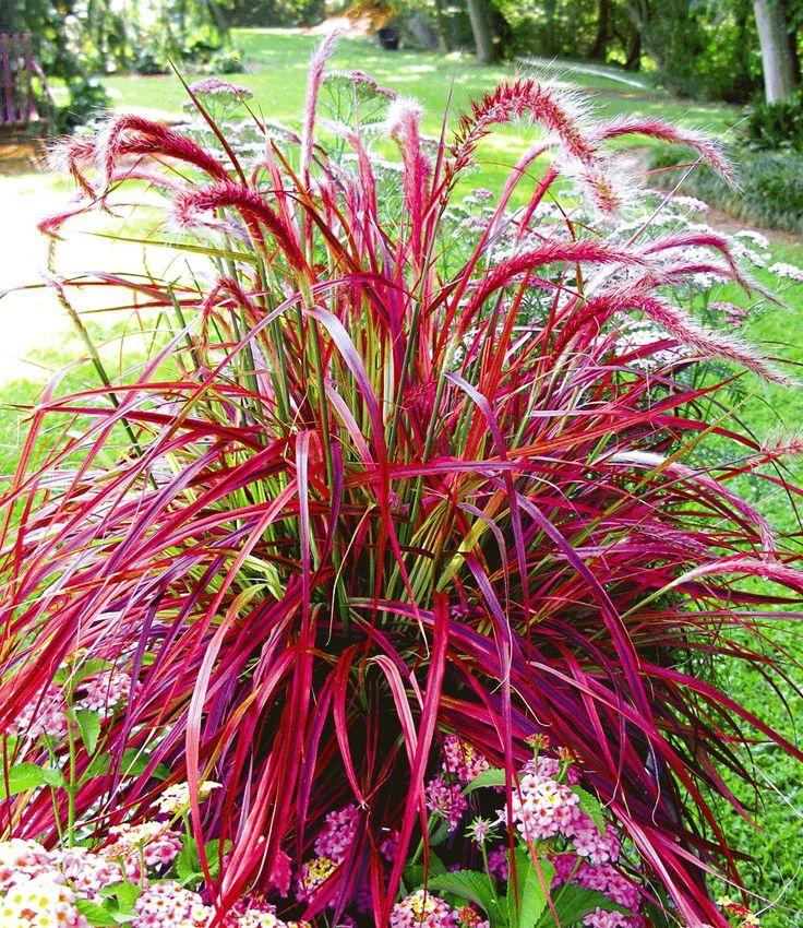 87 best Garten images on Pinterest Garden plants, Autumn - gartenpflanzen winterhart immergrun
