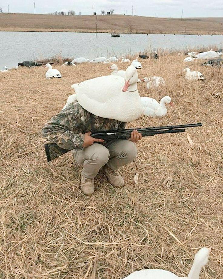 веселые картинки охота на уток