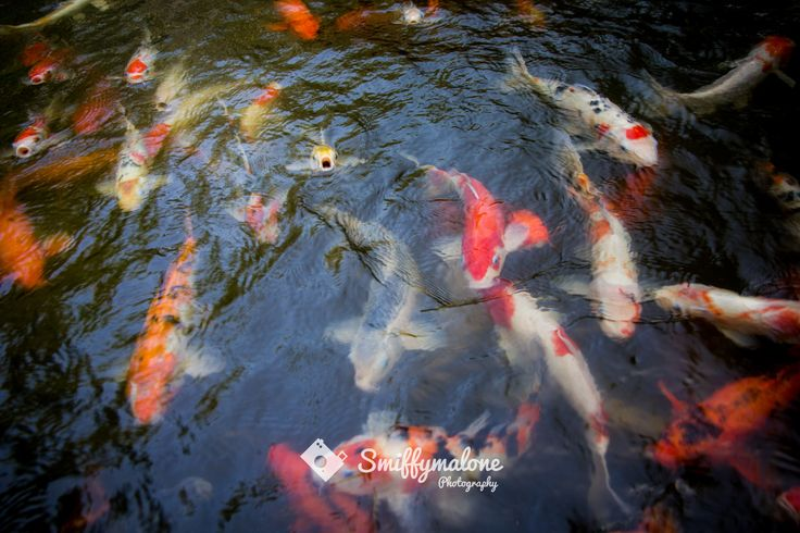 Opposite the Boutique Shop. Courtesy of Paul Smith. More great photos at  http://www.smiffymalonephotography.com/  #zazen #resort #details #fish