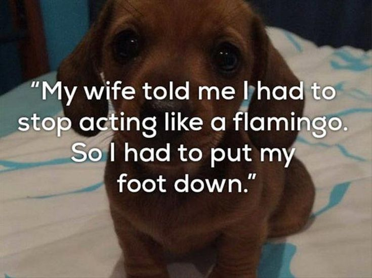 Really Bad One Liner Jokes Are Funnier With Dogs - 23 Pics