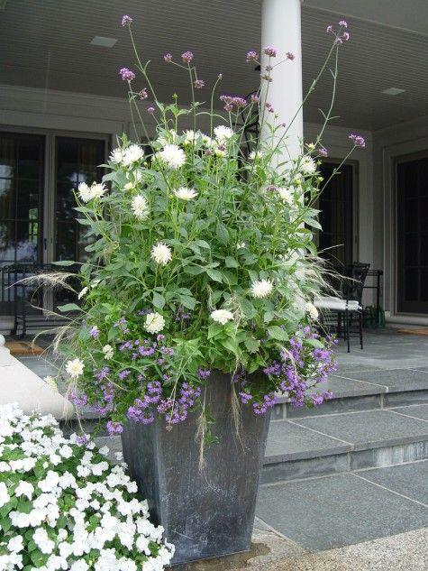 verbena bonariensis and white dahliasGardens Ideas, Outdoor Pots, Verbena Bonariensis, Lead Gardens Pots Jpg, Add Heights, Gardens Outdoor, Gardens Flowerbed, Planters Ideas, Outdoor Planters