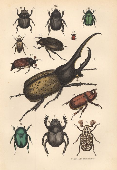 Insects are so intriguing and numerous. So much to learn about them and from them.