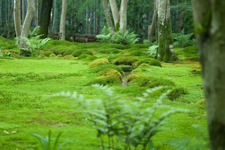 Kyoto Photo: Moss At Gio-ji Temple