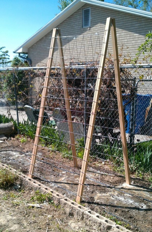 Awesome DIY Cucumber Trellis   2x3s, Concrete Reinforcement Mesh And A Couple Strap  Hinges. Staple