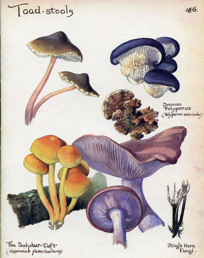 Edith Holden~Toadstools, November 1906 #Botanical #Illustration #Print