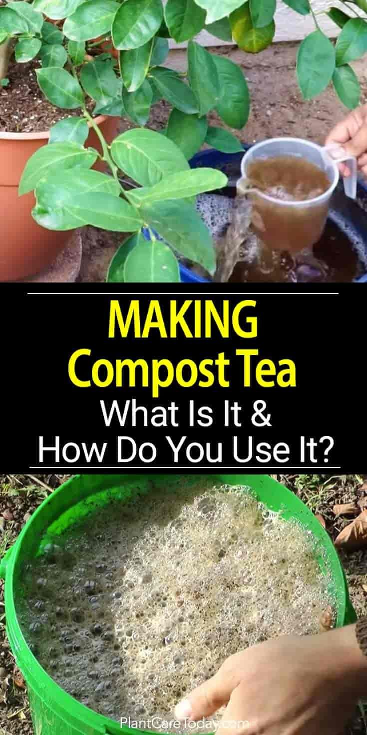Learn how to make compost tea, how to apply it to your lawn and garden. A simple natural solution to feed and fertilize without chemicals [LEARN MORE]