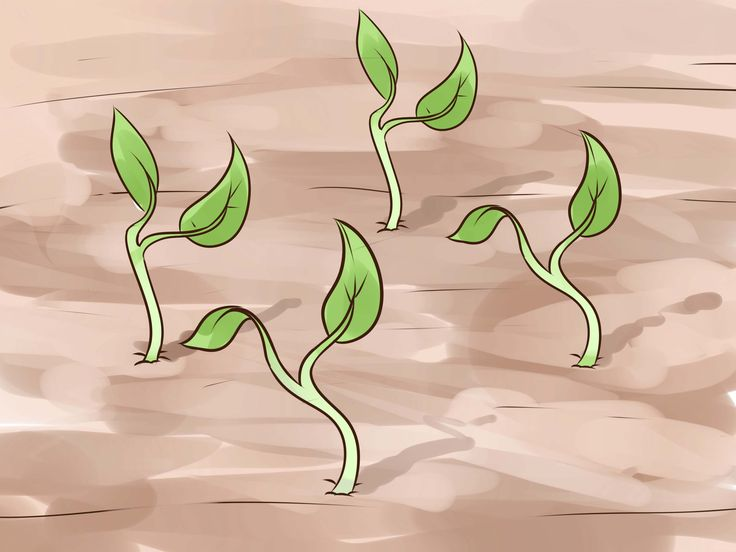 más de 25 ideas increíbles sobre tierra para macetas en pinterest
