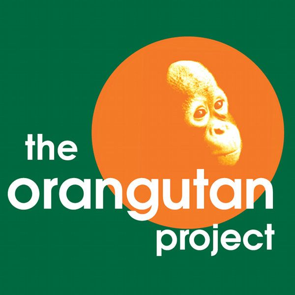 The Orangutan Project (TOP) is a not-for-profit organization, that supports endangered orangutans, protects the rainforest , and works with reintroducing displaced orangutans back into the wild. http://www.orangutan.org.au/
