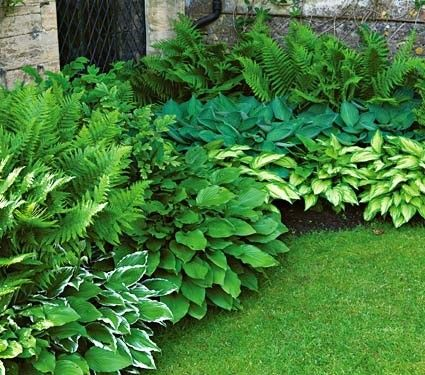 Love these ferns and hostas for a shady location. -- Hostas in front of landscaping block .... nice texture
