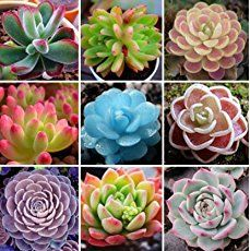 It can be hard to find those colorful succulents you see in so many photos online. This post will help you find those succulents you're looking for!