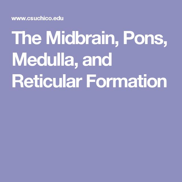 The Midbrain, Pons, Medulla, and Reticular Formation